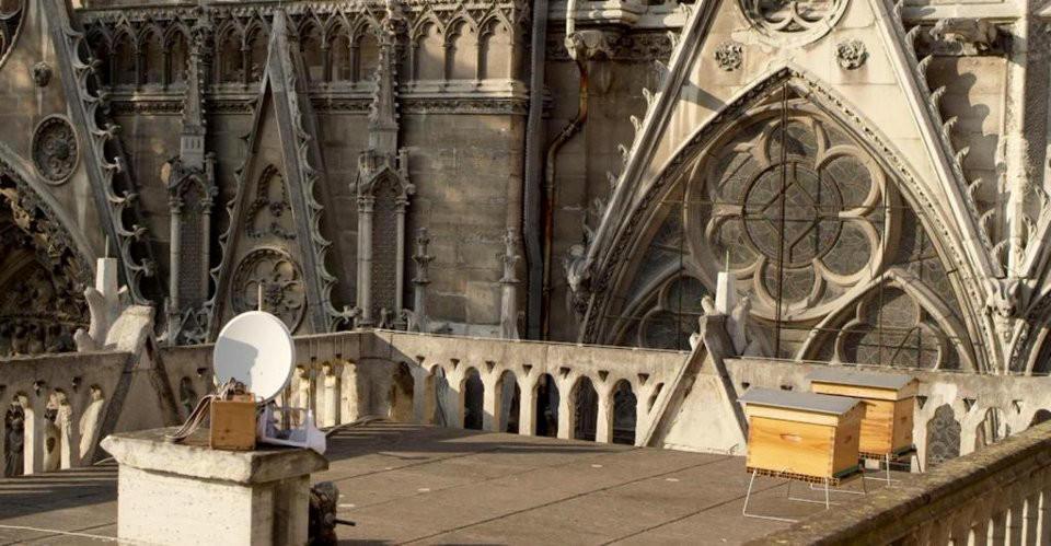 Les abeilles de Notre-Dame de Paris